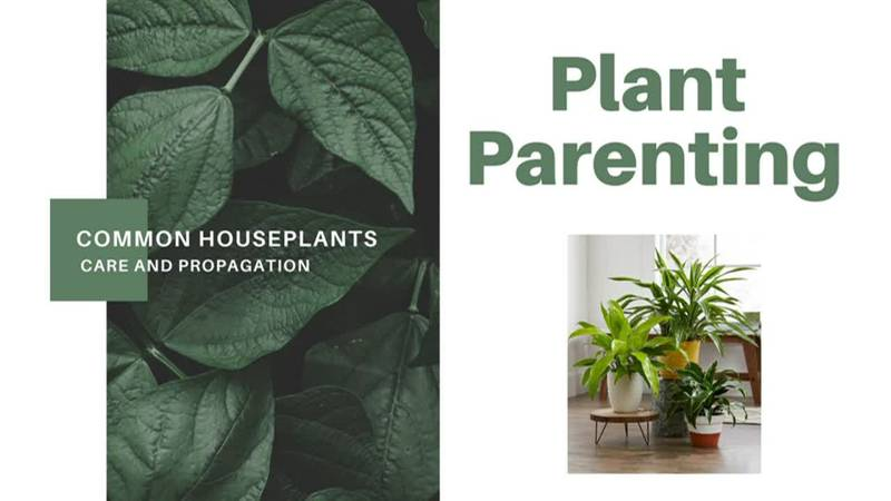 Plant Parenting: Common Houseplants, Care, and Propagation