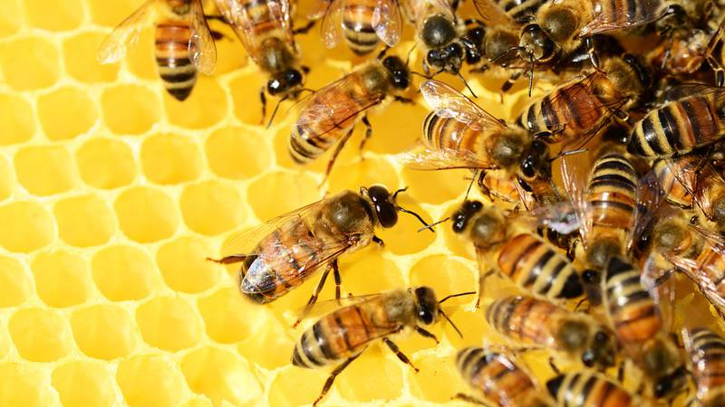 In 2016, millions of bees died after an aerial spray in Dorchester County. That's why bee...