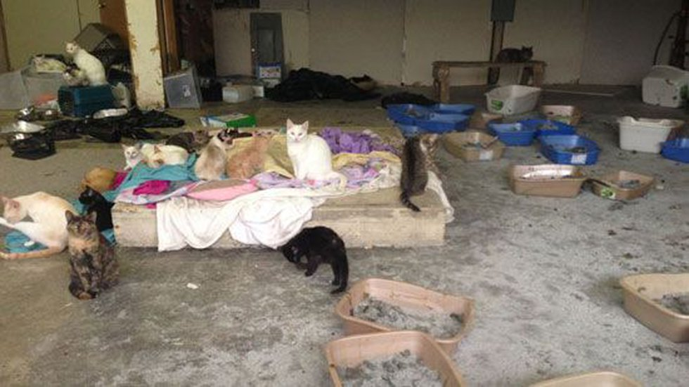 Photos taken in the former market show dozens of cats and more than 15 full litter boxes.