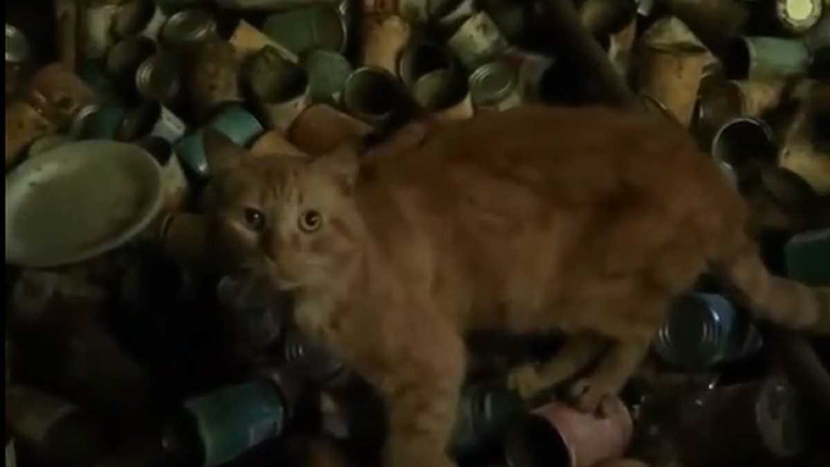 Over 100 cats rescued from hoarding situation in Arkansas