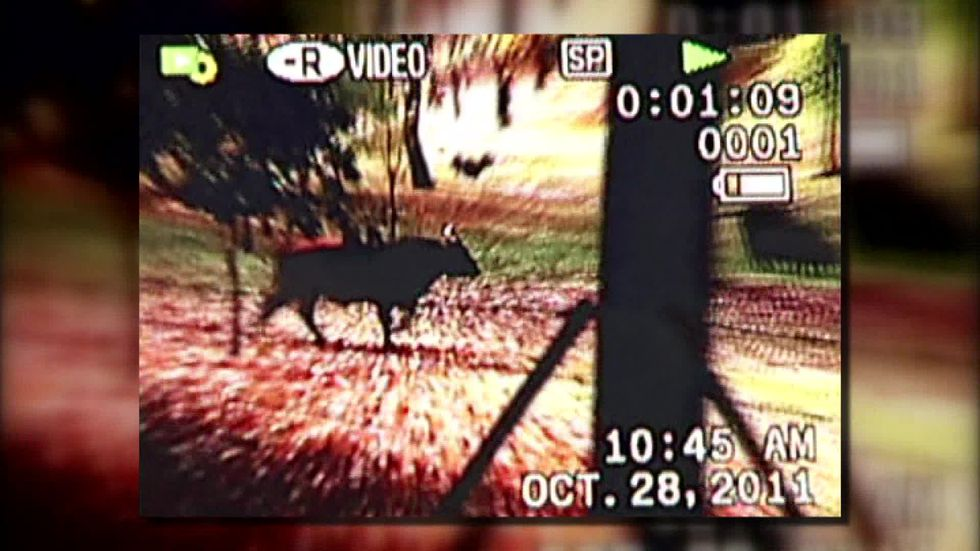Archived video, 2011 (Source: WMC Action News 5)