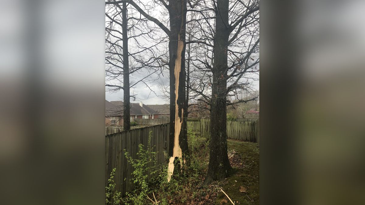 Gary Cox took this photo of possible lightning damage to a tree in Horn Lake, Mississippi March...