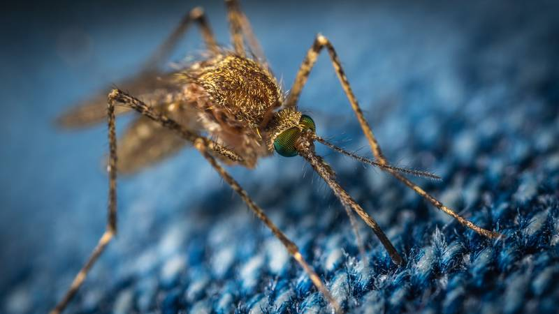 The year's first positive sample for West Nile Virus in EBR Parish was collected in the O'Neal...