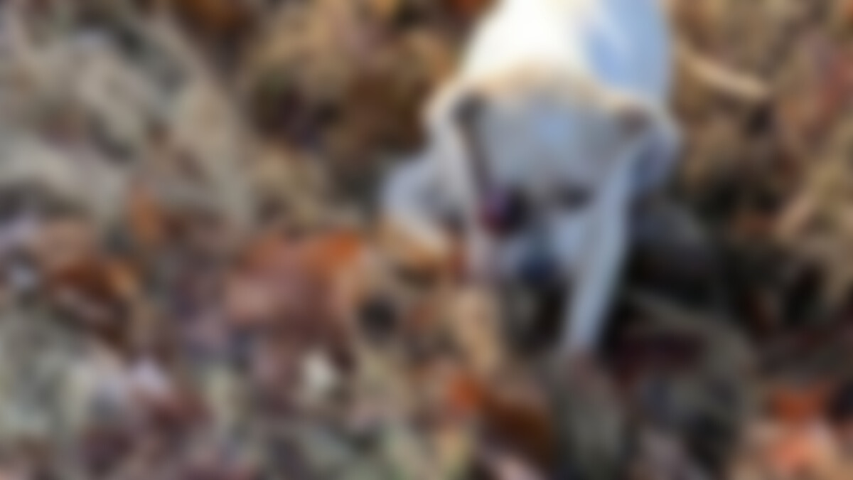 Dog allegedly beaten in Humboldt, Tennessee