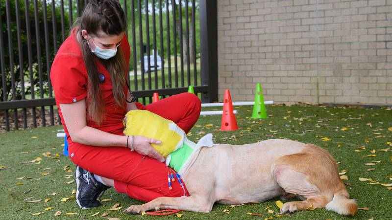 Buddy the dog is receiving special care from a team of doctors and the Tunica Humane Society...