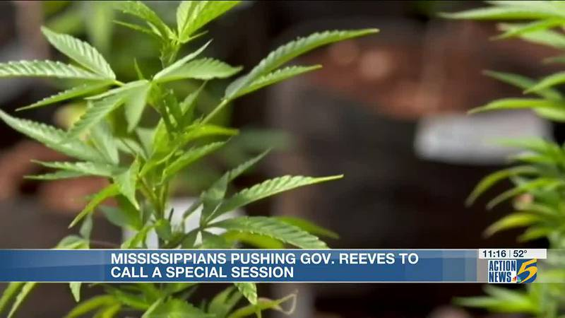 Medical cannabis advocates head for MS state capital to demand special session