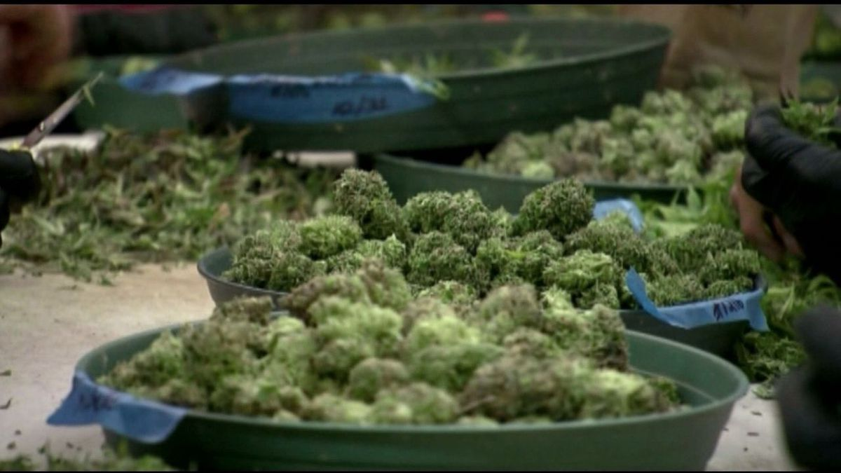 Medical marijuana sales in Arkansas continue to remain positive, with the state surpassing $330...