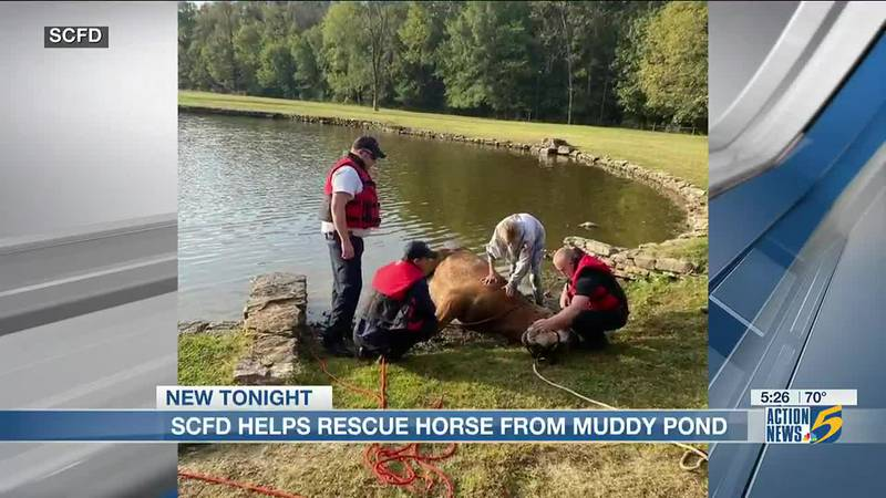 Shelby County Fire Department helps rescue horse from muddy pond