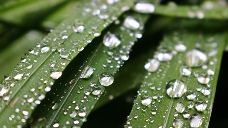 Dew forms as the result of a clear and cool night