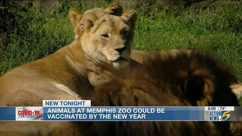 Memphis Zoo animals may soon get COVID-19 vaccine