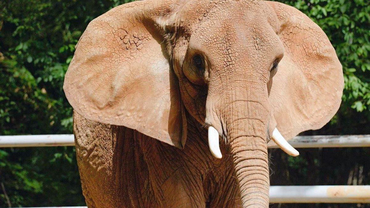 Memphis Zoo elephant, Tyranza, dies after health decline