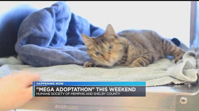 Humane Society of Memphis hosts 36-hour Mega Adoptathon