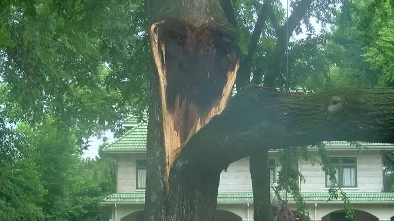 Tree falls on porsche