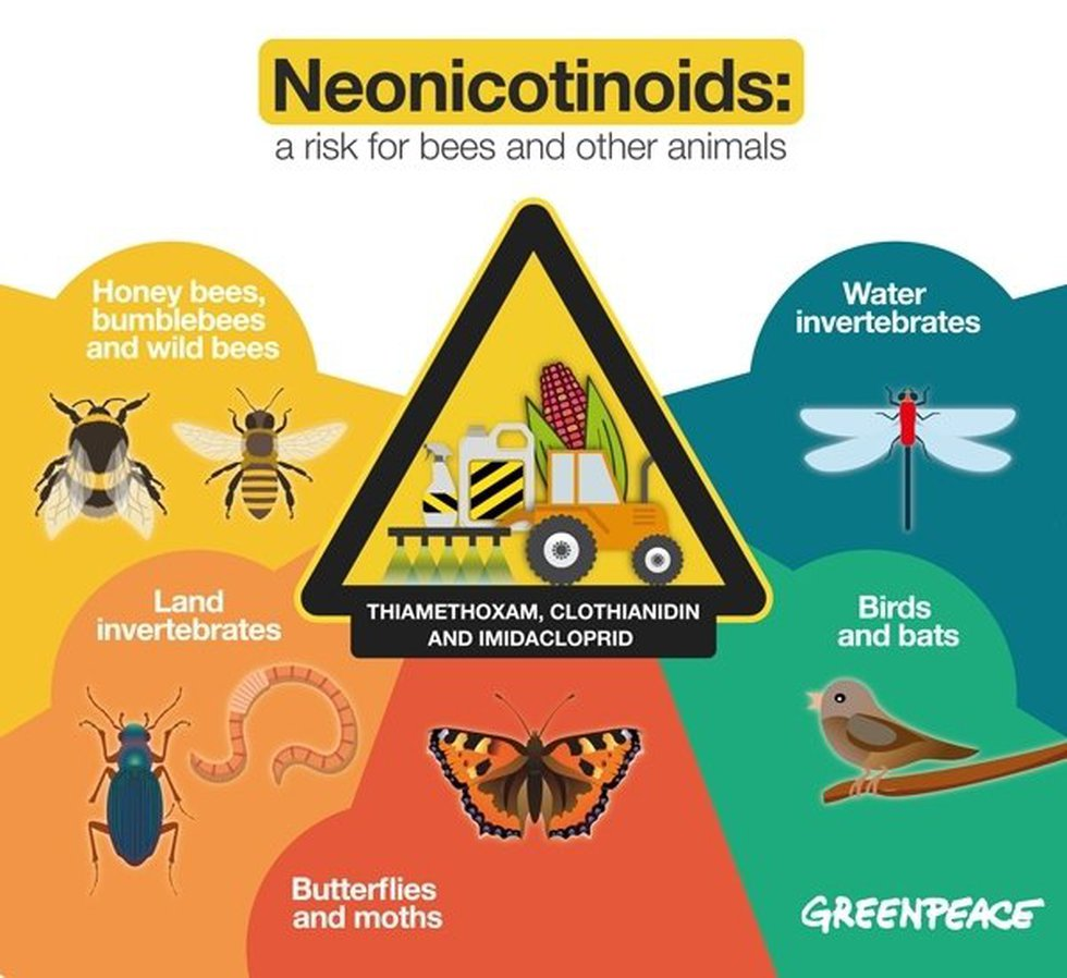 Neonicotinoids: A serious threat for flower-hopping life-bringers and many more animals