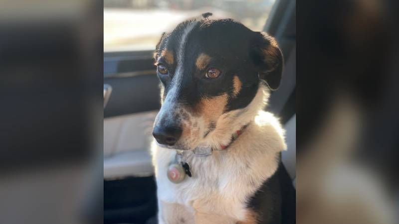 Colorado man has truck stolen in Jackson with pet dog still inside: 'I can't go home without him'