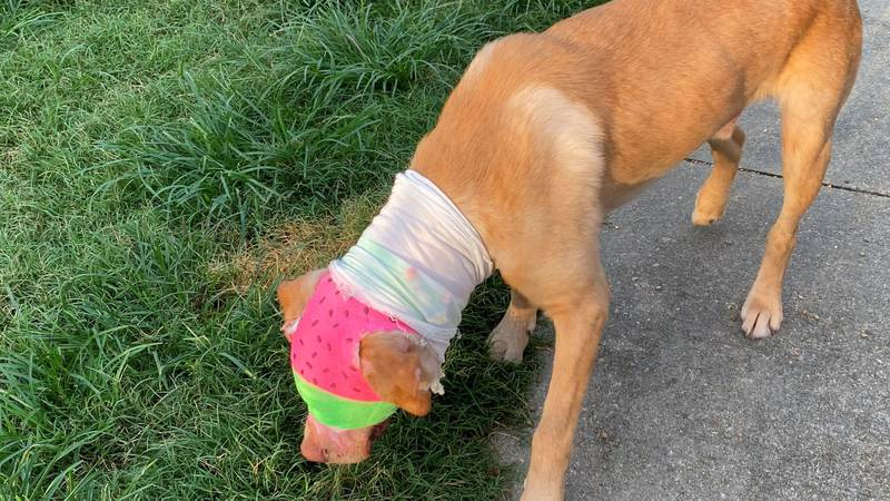 Buddy the dog could leave hospital in August
