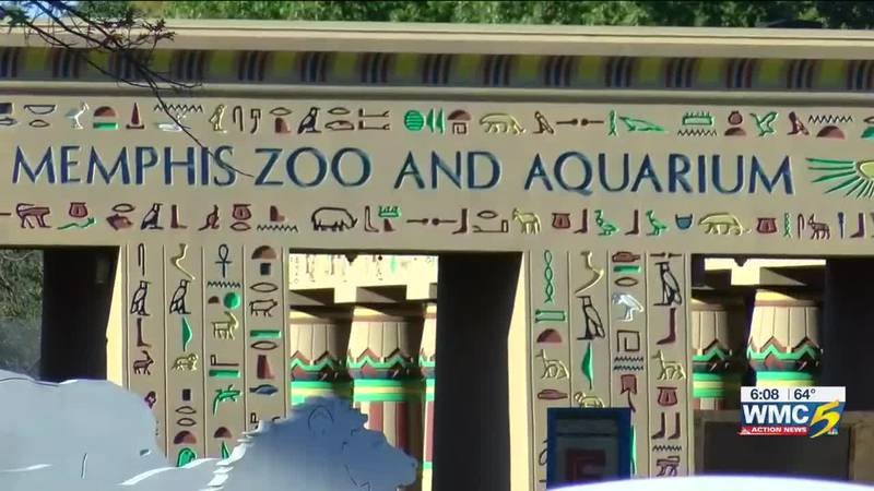 Man accidentally shoots himself in the leg at Memphis Zoo parking lot
