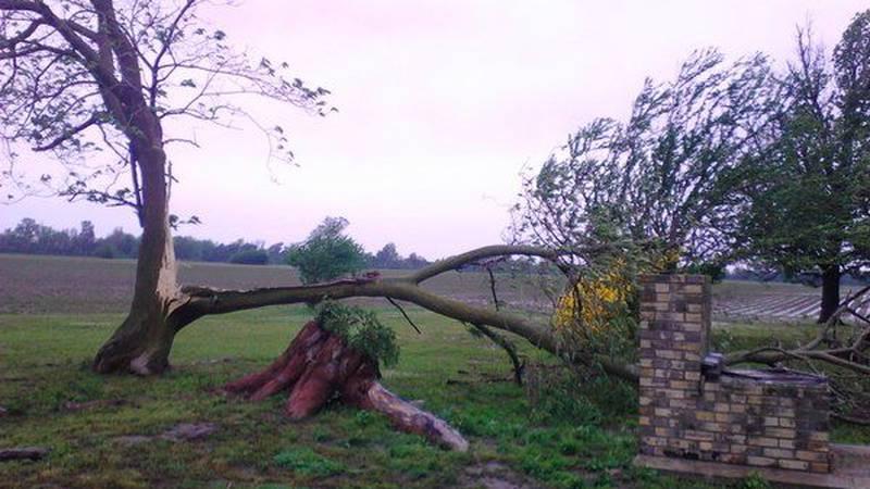Wind Damage in Lepanto (Source: Twitter: @ut_fan75)